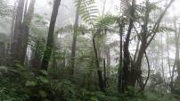 Misty forest of Mount Cameroon